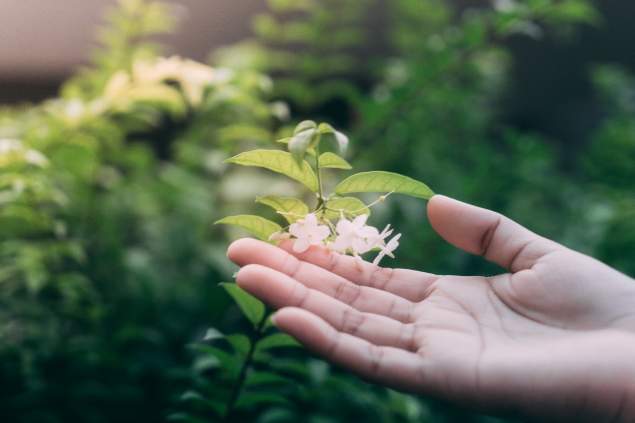 Hand touching green leaf and the white flowers  in the garden